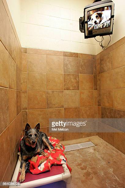 petsmart pets hotel stock photos and pictures