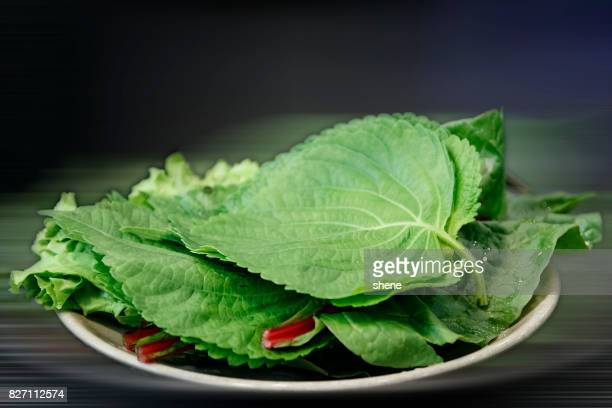 perilla leaves and lettuce - shiso stock pictures, royalty-free photos & images