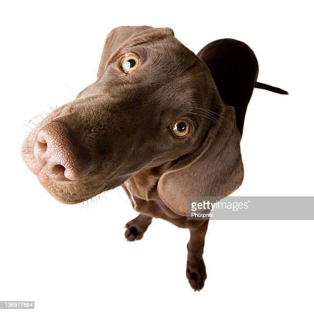 Perplex puppy