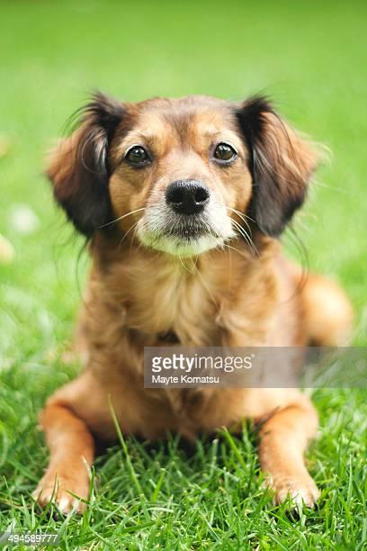 perro cesped - alcazar de san juan - fotografias e filmes do acervo