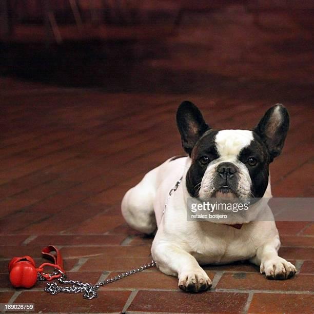 perro esperando a su dueño con la correa puesta
