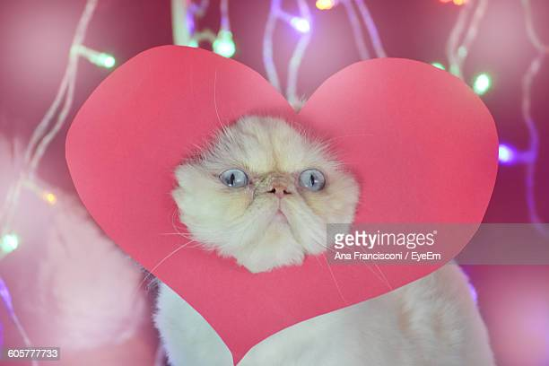 Persian Cat Covered With Heart Shape Decoration Against Illuminated Lights