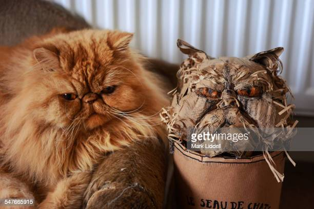 Persian cat with cardboard likeness