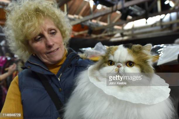 Persian Tortie Tabby breed cat wears a coffee filter to keep it clean at the LondonCats International Show and Expo at Tabacco dock on May 04 2019 in...