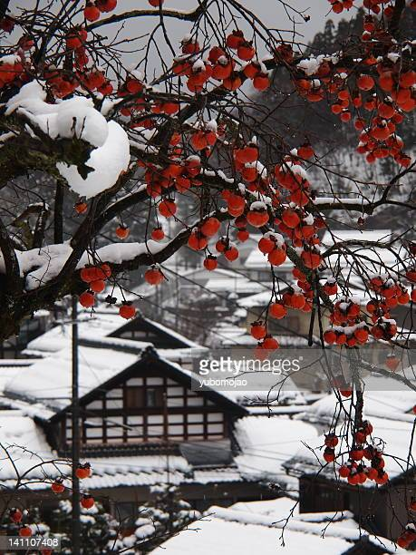 Persimmon with snow