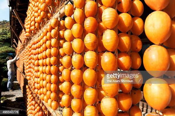Persimmons are hung to produce dried persimmon on November 20 2008 in Yamagata Gifu Japan