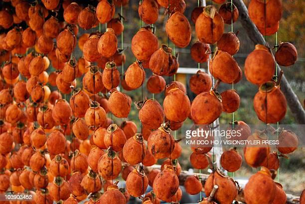 Persimmons on drying (Korean Got-gam)