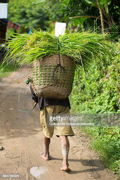 Person carrying plants on back, rear view, Kengtung, Shan State, Myanmar