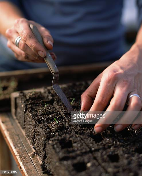 Person coaxing seedling out of soil