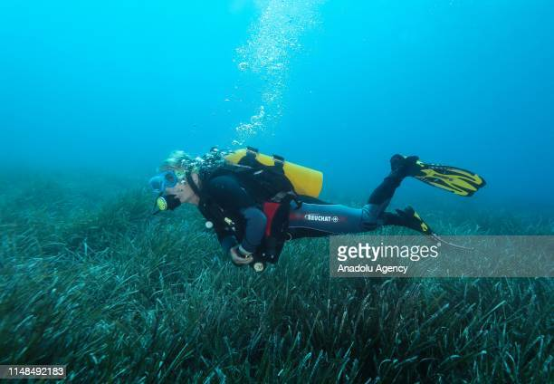 Person dives at Karaburun district of Turkey's western Izmir province on June 06, 2019. Diving tourism instantly increased after Culture and Tourism...