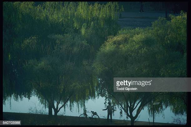 person doing tai chi in beijing - gipstein stock pictures, royalty-free photos & images