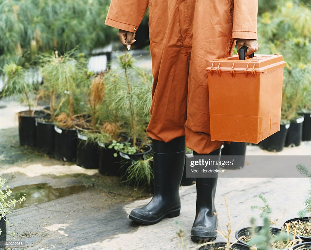 Person Dressed in Protective Clothing Holding a Box in a Greenhouse : Stock Photo