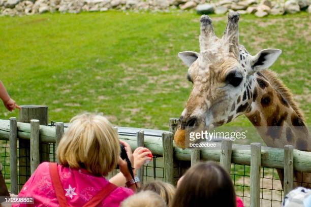 A person feeding a giraffe that is leaning over the fence