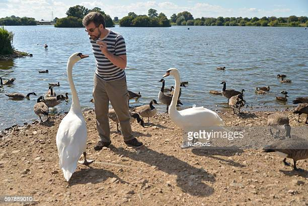 Person feeding swans at Attenborough Nature Reserve on August 29 the August bank holiday Monday, in Nottingham, England.