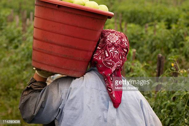 Person from behind carrying bucket of tomatoes on shoulder