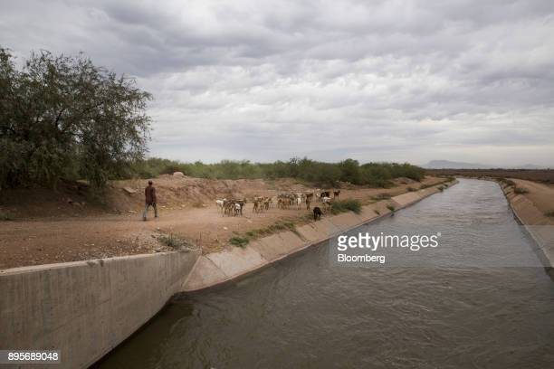 A person herds goats near a river in the village of Loma de Bacum Sonora state Mexico on Tuesday Dec 5 2017 Sempra Energy's natural gas pipeline that...