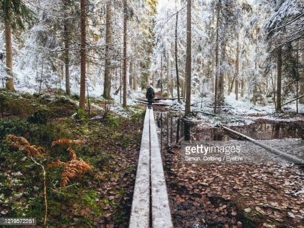 person hiking in forest in early spring - sweden stock pictures, royalty-free photos & images