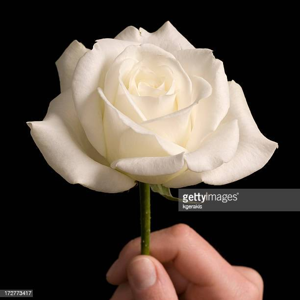 Person holding a white rose in a black background