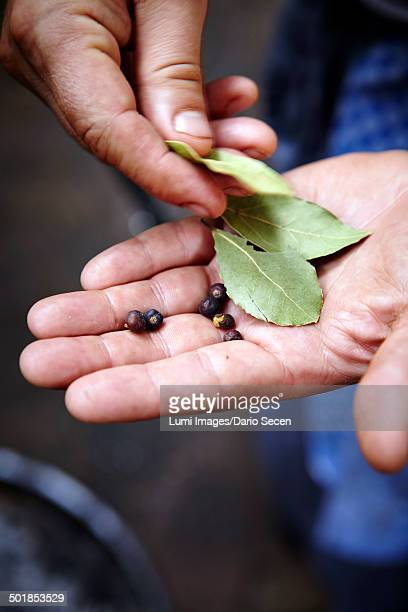 Person Holding Bay Leaves and Juniper Berries In Hands
