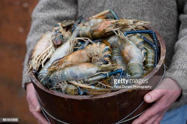 person holding bucket of prawn - ウシエビ ストックフォトと画像