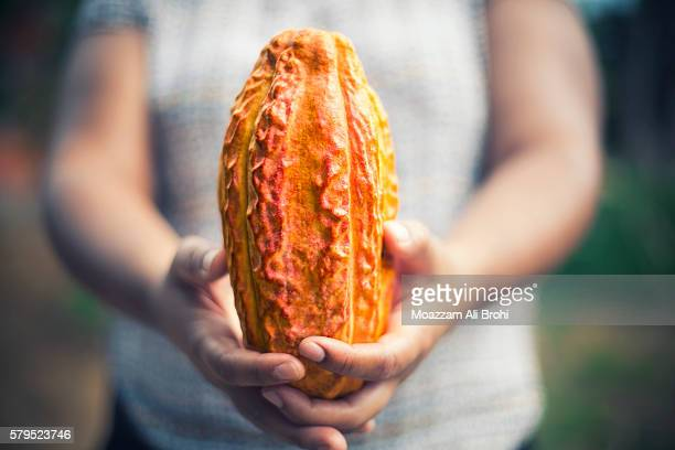 person holding cacao bean pod - theobroma stock photos and pictures
