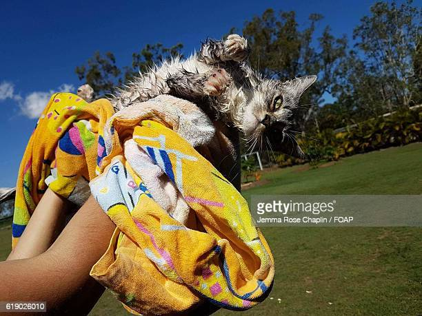 Person holding cat and drying off with towel