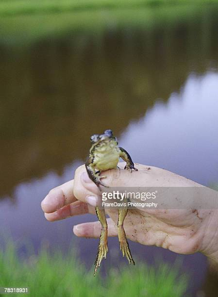 Person holding frog