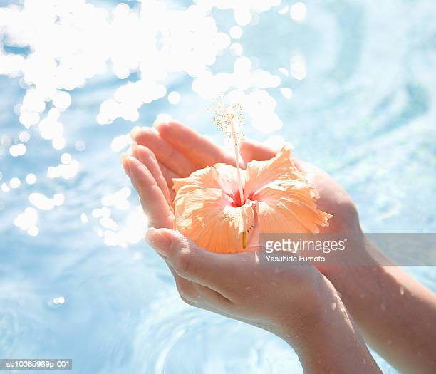 Person holding hibiscus flower, close-up