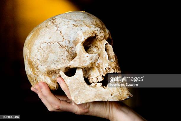person holding human skull - human skull stock pictures, royalty-free photos & images