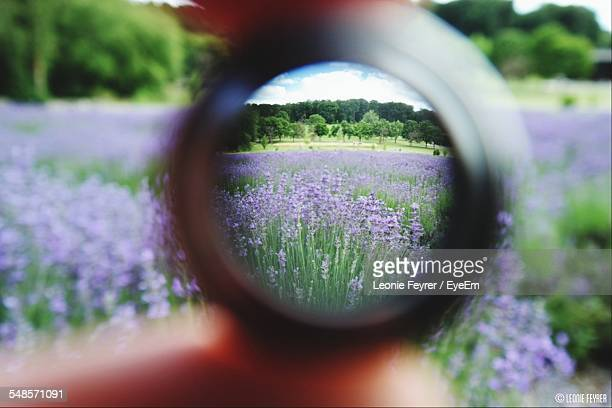 Person Holding Lens On Lavender Field
