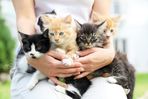 Person holding little cats in arms. 183384678