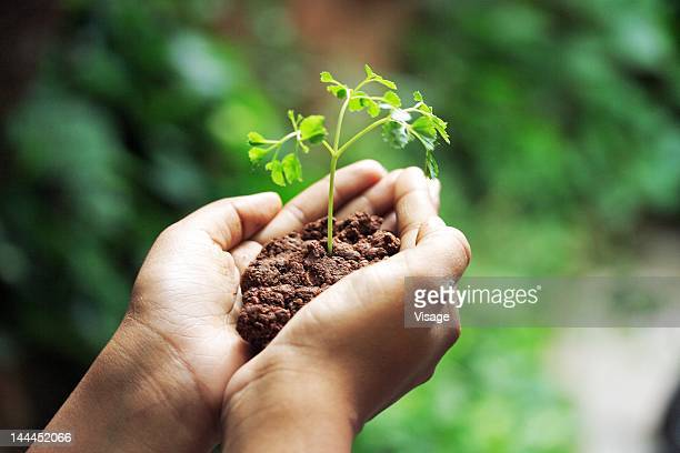 person holding seedling, close up of hands