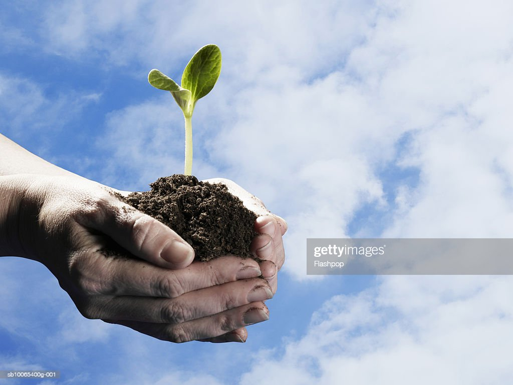 Person holding seedling in earth against skyscape, close-up of hands : Foto stock