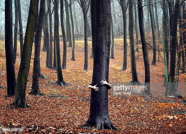 person hugging tree - demonstrant stock-fotos und bilder