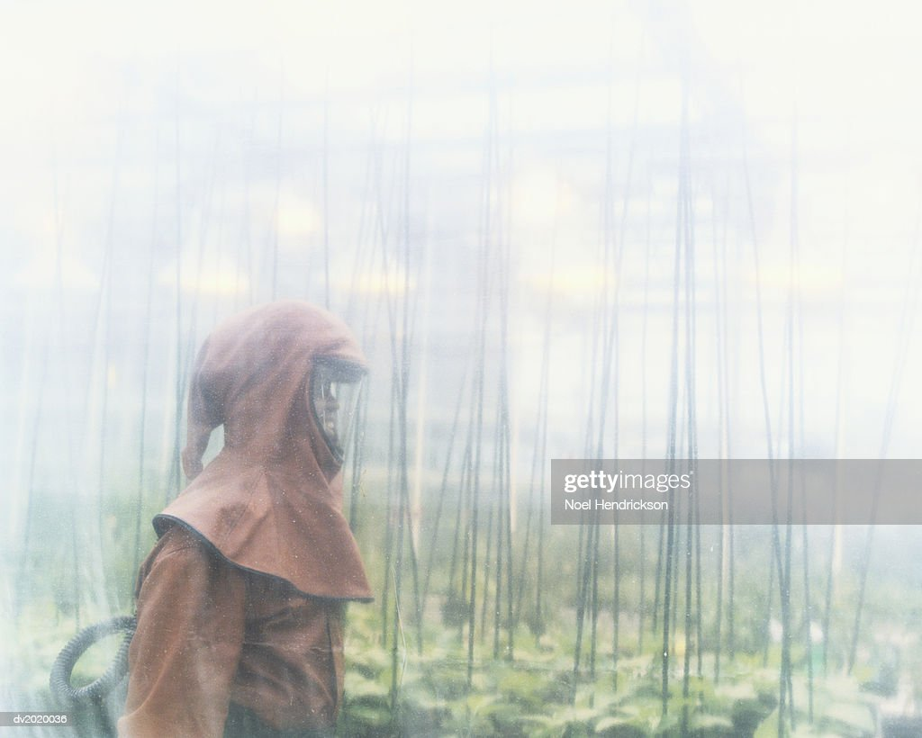Person in a Greenhouse Dressed in Protective Clothing : Stock Photo