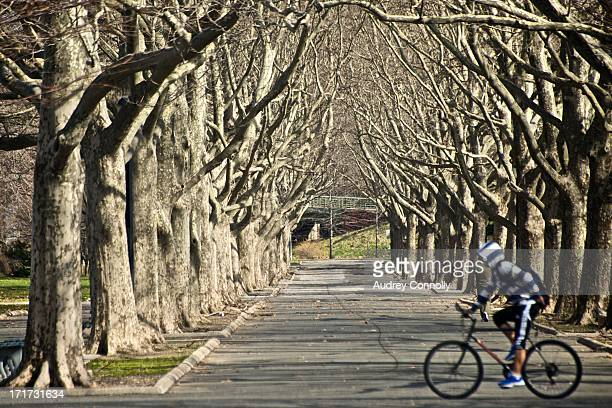 Person in blue and white striped hoodie rides a bicycle past a tunnel of trees in Flushing Meadows Park, Queens, New York City