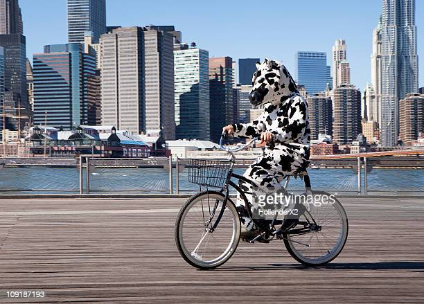 person in cow costume on bike with city - cowhide stock photos and pictures
