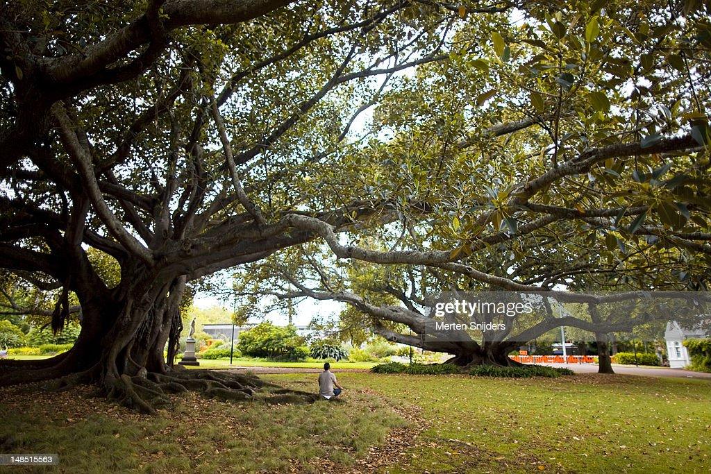 Person in morning meditation under a tree in Albert Park. : Stockfoto