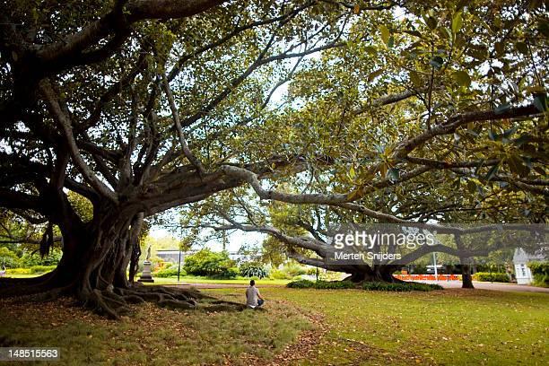 person in morning meditation under a tree in albert park. - merten snijders stockfoto's en -beelden