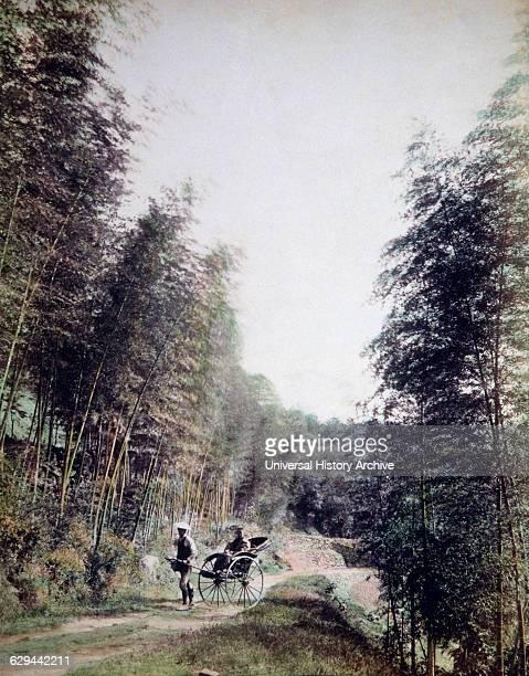 Person in Rickshaw Being Pulled Through Bamboo Garden Japan 1880