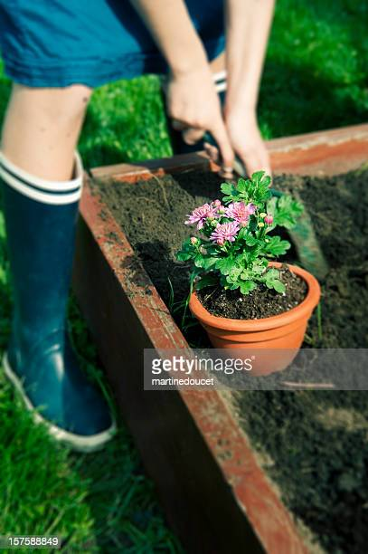 "person in rubber boots gardening in the spring. - ""martine doucet"" or martinedoucet stock pictures, royalty-free photos & images"