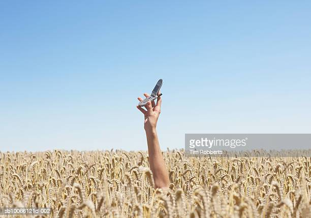 Person in wheat field holding mobile phone (differential focus)