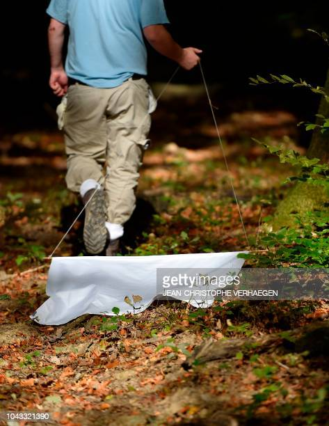 A person makes a taking of ticks in the forest near the laboratory of the INRA which constitutes a tiquothèque to study its geographical distribution...