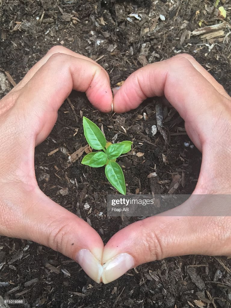 A Person Making Love Symbol With Hand Around The Sapling Stock Photo