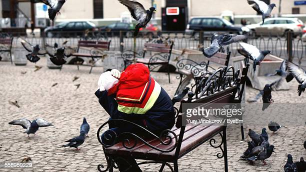 person on bench in square amid flying pigeons - animals attacking stock pictures, royalty-free photos & images