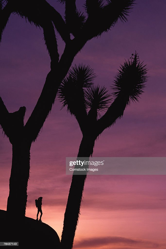 Person on rock formation with joshua trees : Stockfoto
