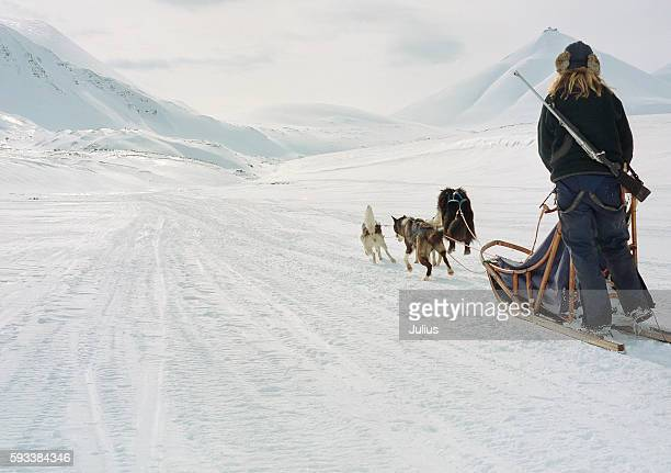 Person on Sledge Pulled by Husky Dogs