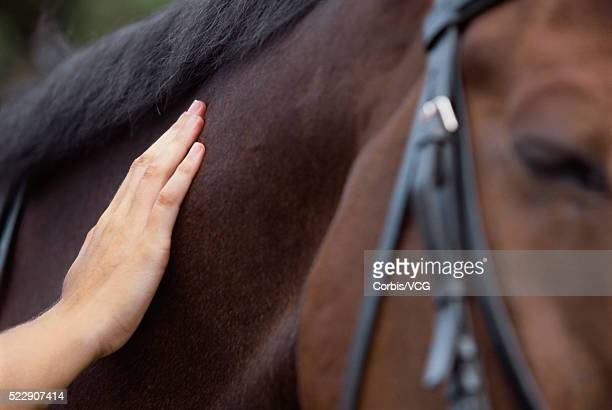 Person Petting Horse's Neck