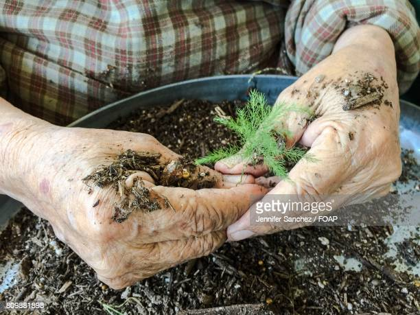 Person planting small plant in pot