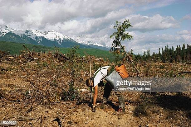 Person planting trees in mountains